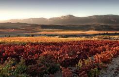 La moda del vino como guía de nuevos destinos