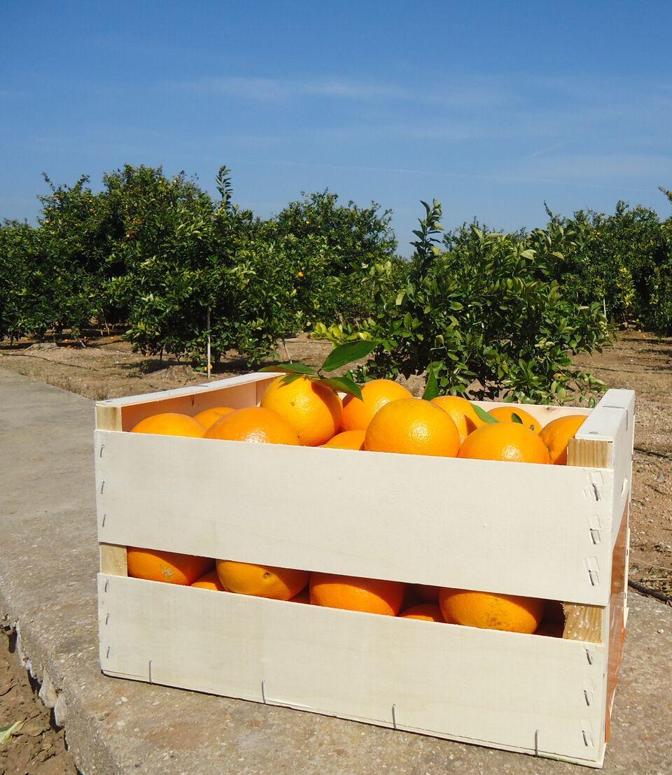 El campo se pasa al e-commerce: comprar fruta o verdura por internet