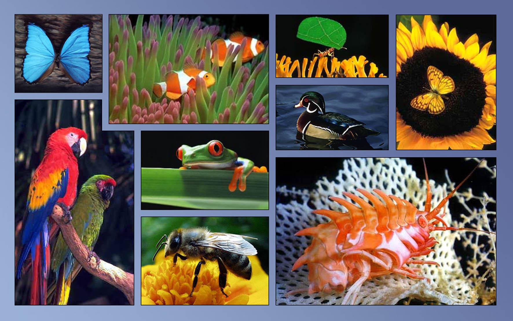 Cómo ayudar a la biodiversidad