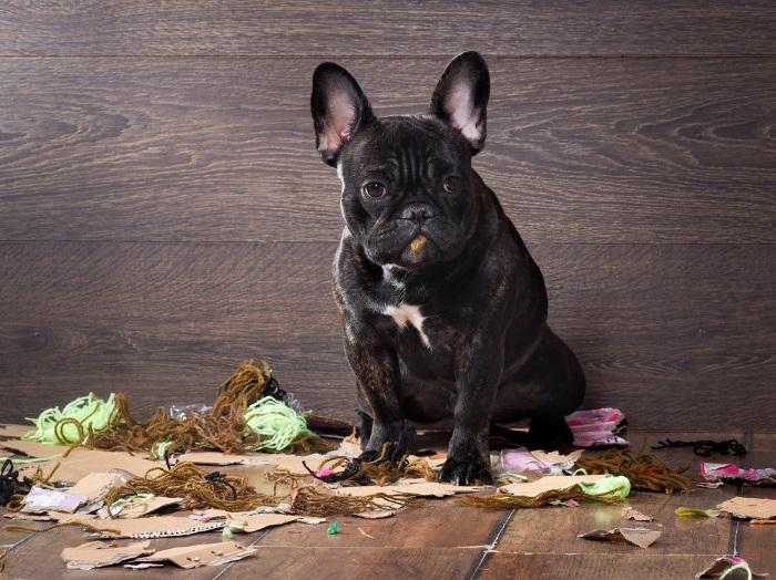 """La """"pica"""", un problema para los dueños cuando las mascotas comen de la basura"""