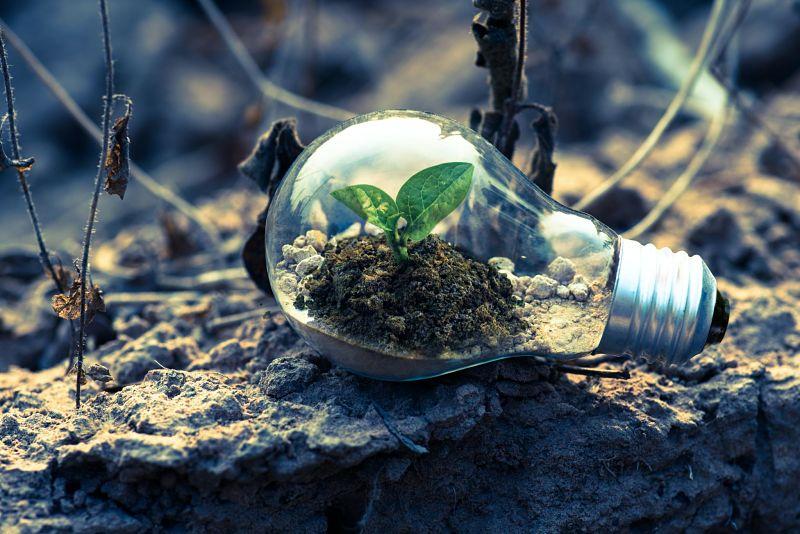 CRM Synergies apuesta por el cuidado del medioambiental